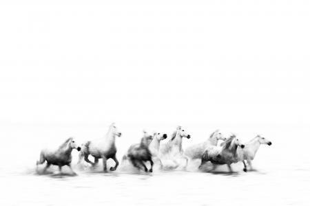 Minimalist horses