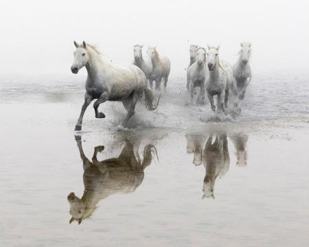 Reflected horses