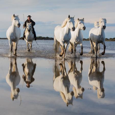Herding white horses