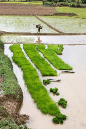 Walk through the rice terraces