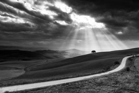 Suns rays behind a solitary tree in the Orcia Valley, Italy