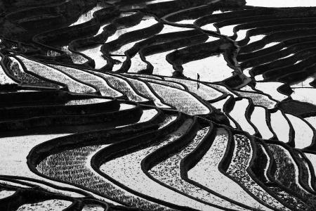 A man walks on the rice terraces, Yuanyang, Hunnan, china
