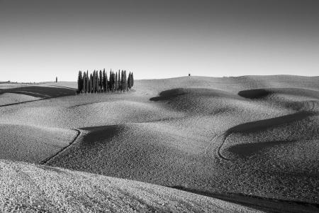 Italy, Tuscany, Val d'Orcia, clump of cypress trees