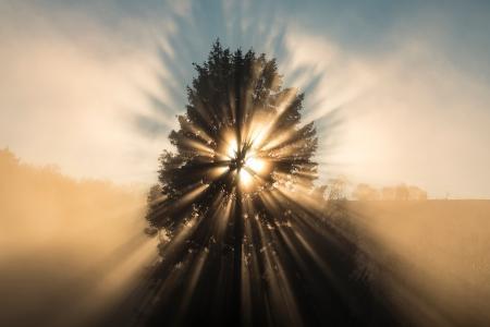 Sun bursts through tree on a misty morning, France