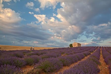 People walking to a chapel during lavender season, Provence