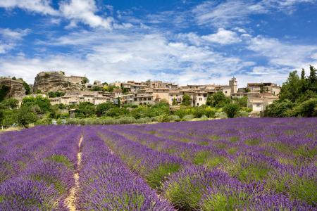 Lavender field & Saignon, Provence, France