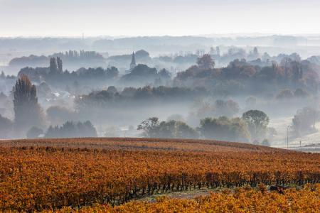 Savigny-lès-Beaune and vines at dawn, Beaune, Burgundy
