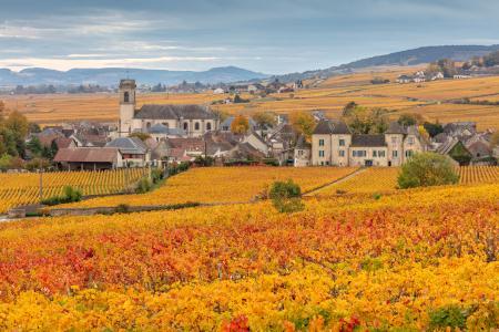 Pommard village and vines in the autumn, Bourgogne (Burgundy), France