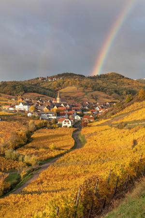 Ammerschwihr village and vineyards in the autumn with a rainbow, Alsace