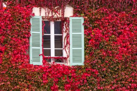 Window surrounded by red ivy in the autumn, Burgundy, France