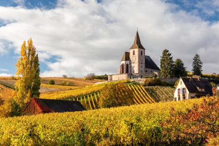 Saint-Jacques-le-Majeur church surrounded by vines in the autumn, Alsace, France
