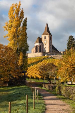 Saint-Jacques-le-Majeur church surrounded by vines in the autumn