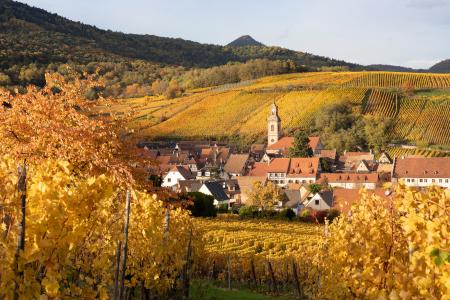 Riquewihr and vineyards in the autumn, Alsace, France