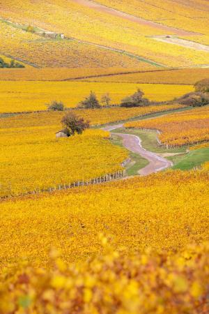 Winding road in the Chablis region, Burgundy