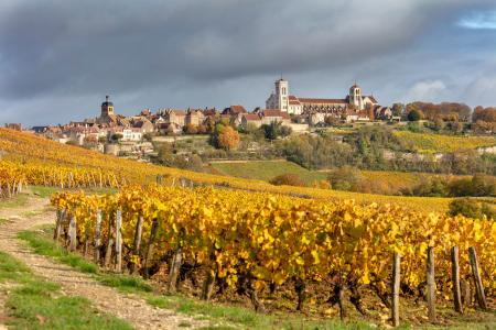 Vezelay surrounded by vines in the autumn, Burgundy