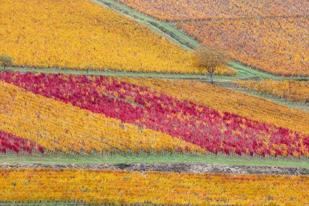 Vineyards in autumn colour, Beaune, Burgundy