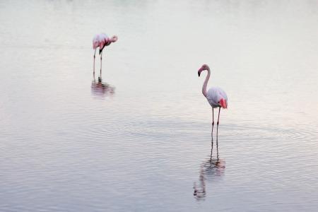 Quiet flamingos