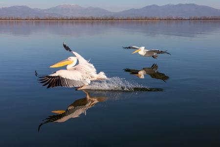 Elegant landing