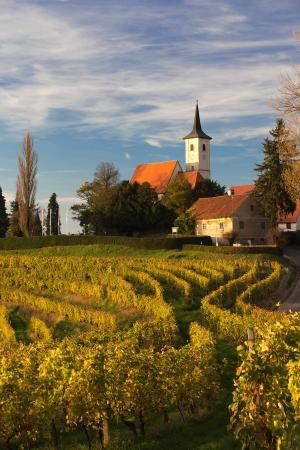 Slovenian vines