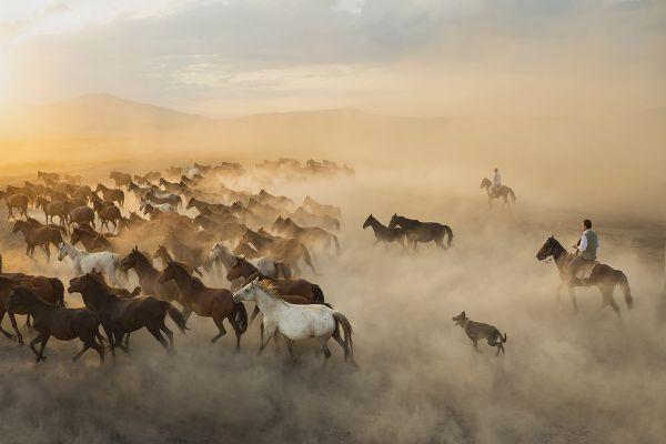 Yilki horses photo workshop in Central Turkey