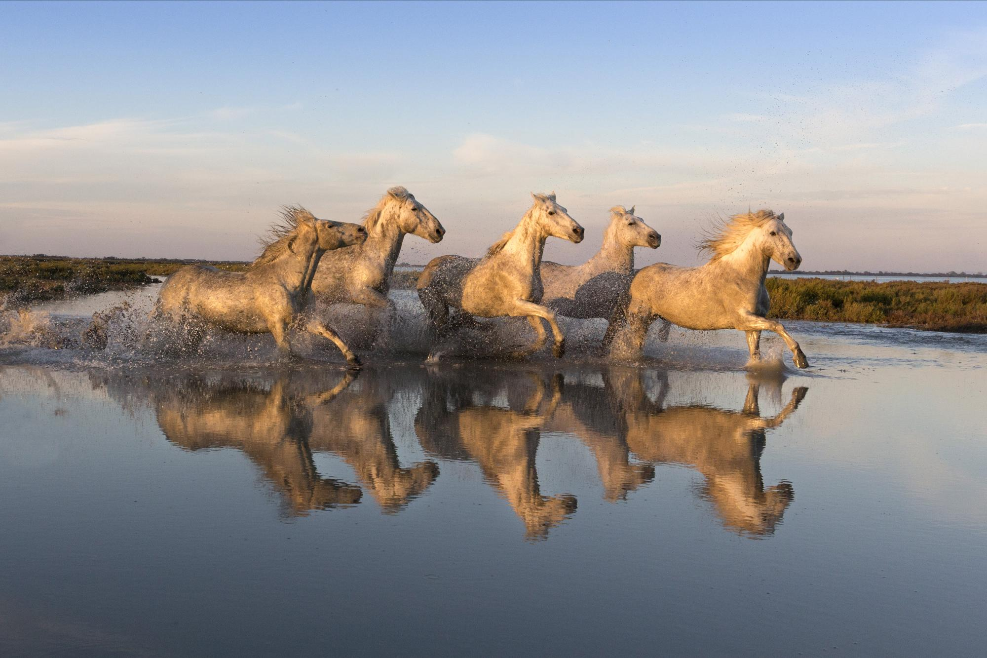 White Horses of the Camargue photography workshop
